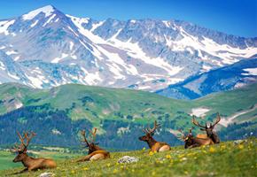 imagen viaje a Rocky Mountain y Hawaii