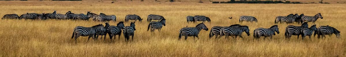 Safaris, naturaleza y animales