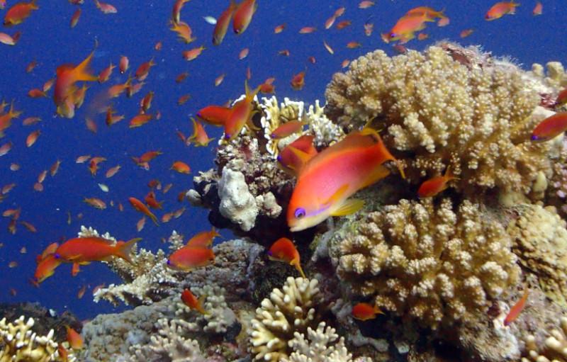 arrecife de coral en el Mar Rojo